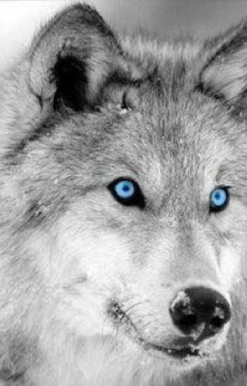The Blue Eyed Wolf.