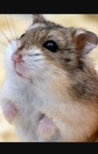 The wild side of hamsters by Hamsternibbles1