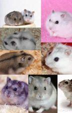 Hamsters by liv_rooney_fan