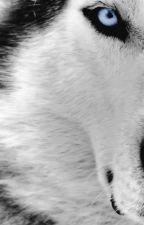 Individual wolf rp by CinnamonKittah