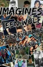 Imagines Teen Wolf/Le labyrinthe/la terre brûlée by lolalol2002