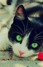 el gato by lulyjasanme