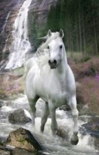 Milena und das weiße Pferd by AnnaLenathielen