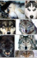 The werewolf bodyguard by MOUSTACHE001