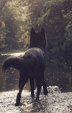 Howling In The Wind by KrystalNiight