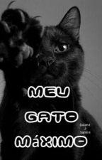 Meu gato Máximo by Daianasantosvieira
