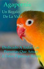 Agapornis Un Regalo De La Vida by Pikaboss2003