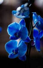Голубая орхидея снежного барса by Nika2002y