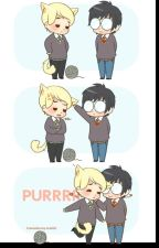 Meow //Drarry\\ by SammActuallyHatesYou