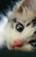 manusia kucing by winnapuspita