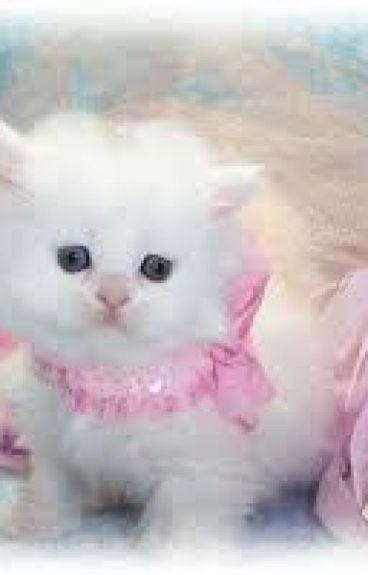 [ 12 chòm sao ] những chú mèo dễ thương của tôi