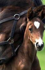 Frasi sui cavalli by zoearbi