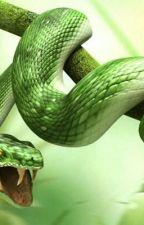 Das Jahr in dem ich vermeindlich lernte Schlangen zu zähmen by SweetHeartWolfChild