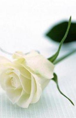 Đọc truyện Hoa hồng trắng - Bạn hay tình? (Tiểu Mao) (Truyện ngắn)