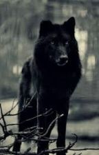 Wolf Rain R.d.g by charmanderxpika