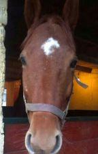Môj  vysnený  kôň by kajakaja8