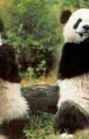 Panda & Me by AOTretard