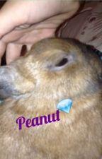 Rabbits!!!!! by Rabbits1098