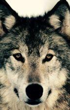Best Werewolf Books by Lolgirl2228