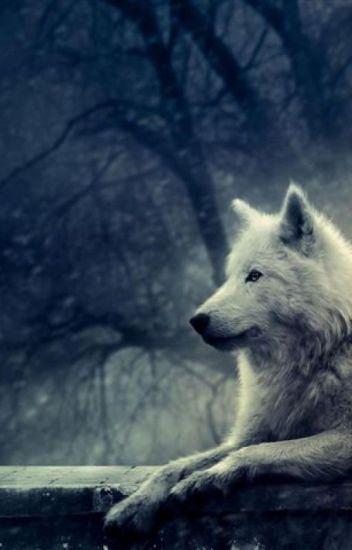 La lupa cacciatrice