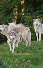 The Werewolf Academy by disneywolf