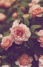 Sweet Dream • 5SOS ✔ by __Yummy__