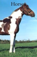 Horses by StellaRan