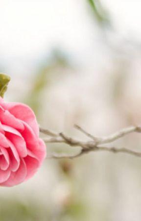 Plátek růže by Choi-Mari
