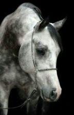 Стихи про Лошадей by Diana-ok