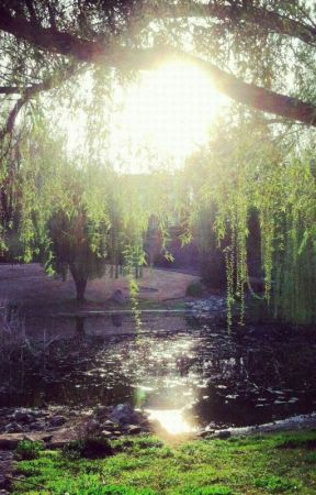 The Sun & Willow by Shay_TheVelvetHammer