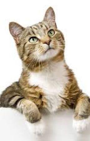 Little Bitty Kitty by redbirdwriter