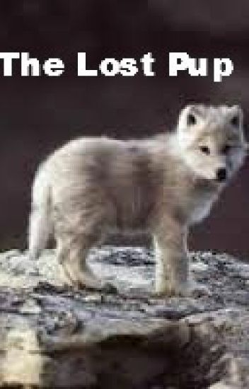 The Lost Pup