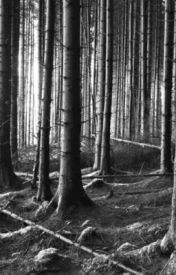Bran x Reader |The Body in the Woods| by SydneyHodgson1