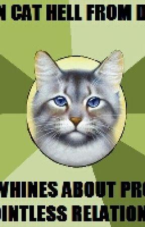 Warrior Cats Funny Stories Jayfeather X Stick Wattpad