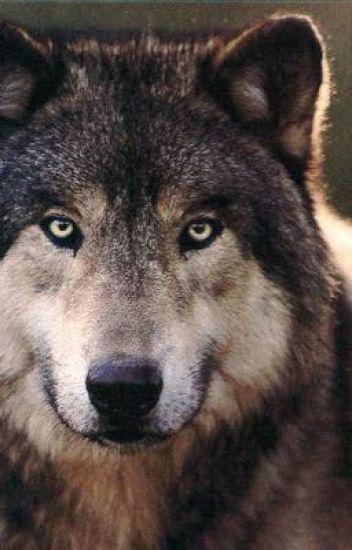 My sweet, sweet mates. {BoyxBoyxBoy Werewolf}