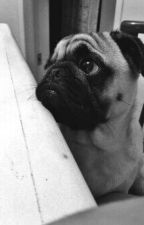 The Pug Was Sad by -Clark-