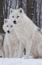 Arctic Moonlight by kick_tidalwaves
