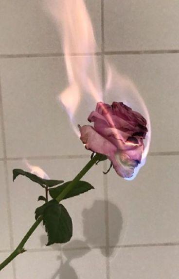 Burnt roses~Phan