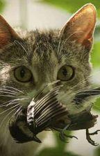 THOSE DARN CATS by gailrunschke