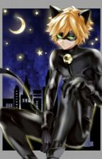 Womanizer~ Chat Noir x Reader by orihime_inoue_bleach