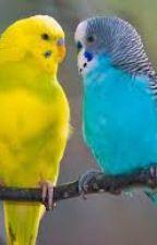 Muhabbet Kuşları by esraates212