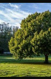 TREES by shreya_jn28