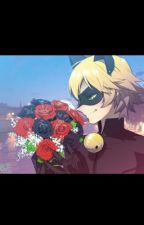 La Rose Noire (Chat Noir x Reader) by Miuna_Hyakuya