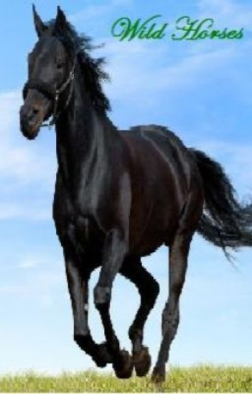 Wild Horses by tori2012