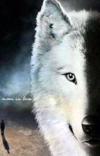 Revenge of the Outcast (PJO/Werewolf AU) by kadynklecka101