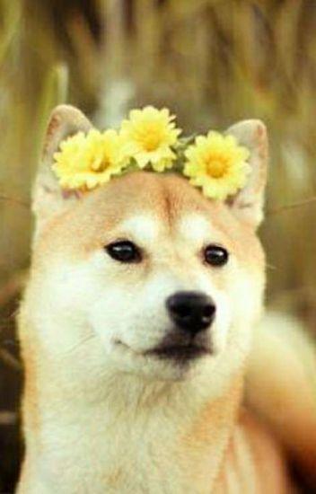 flower crowns // phan