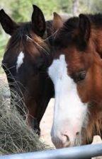wild horse heard book 1:best friends by starbucks43436