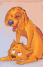 Catdog: Amor de perro y gato by DiegoJL64