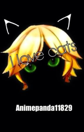 I love cats (Chat Noir x reader) by parosity