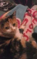 ...Amo A Mi Gato... by familiasi